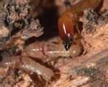 termit1
